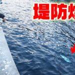 高級魚が爆釣する堤防が凄かった‼