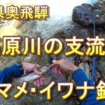 岐阜県奥飛騨の高原川支流でヤマメ釣り