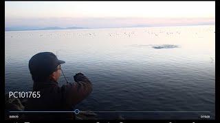 ブラックバス釣り 琵琶湖 ばらし