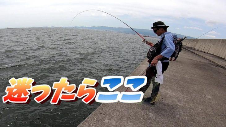 黒鯛がめっちゃ釣れる堤防で全員釣りまくる。