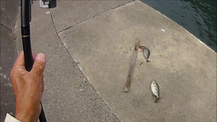 堤防チョイ釣り