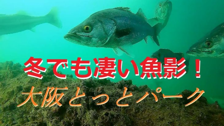 【釣り】冬でもすごい魚影!海釣り公園とっとパークの水中映像