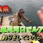 茨城県の久慈川河口でシーバスヒラメを狙いに釣りに行ったら...