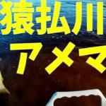猿払川イトウ釣り2018年10月25日2本目 パート-2 北海道