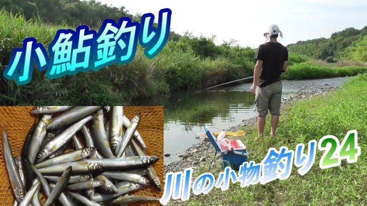 釣り。小鮎釣り。今年のコアユは小さい。川の小物釣り24。 まずまず大漁、入れ食いだ。 琵琶湖 淡水魚 Fishing