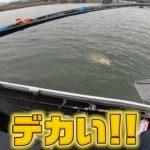 遠賀川にとんでもないのが・・・プレゼント企画もあります【バス釣り】【50up100本への道#14】【遠賀川】