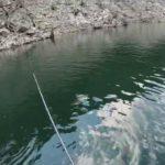 つりどうぐ一休リザーバー福山バス釣り動画【池原ダム】初釣りで、ディスタイルのヴィローラのミドストでブリブリのバスGET!