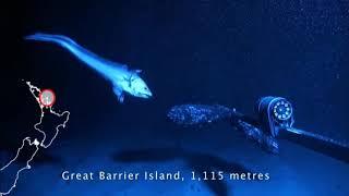水深1000mの深海魚に餌をあげたらとんでもない事態になったwww【魚】