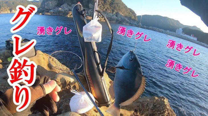 【グレ釣り】周参見沖磯で湧きグレ祭り!岩元渡船