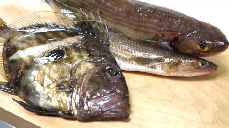 カワハギより美味しい肝を持つ魚!!