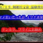6/19渓流釣り 利根川支流 湯檜曽川 イワナ連発