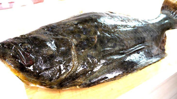 天然高級ヒラメのエンガワ丼ぶりを作る!