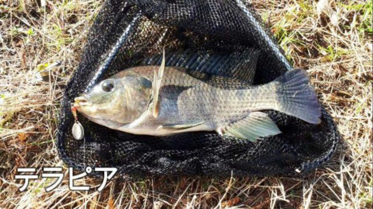 ドブ川温泉で怪物テラピア釣り