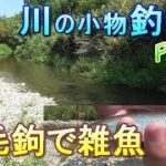 釣り。鮎毛鉤で雑魚。川の小物釣り16。 アユ釣りのつもりが普通の小物釣りになってしまった。入れ食い、大漁。 琵琶湖 淡水魚 Fishing