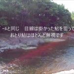 令和の釣り道楽 鮎釣り 大分県日田市某所 2019年6月25日 今日は5匹の釣果でした