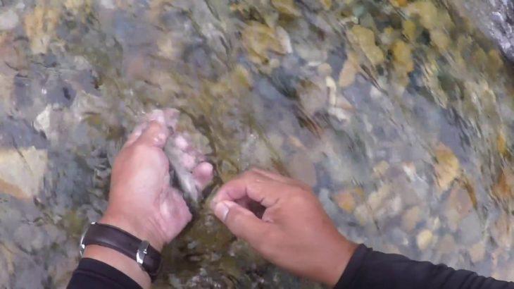 馬瀬川上流アユ釣り動画  第3部