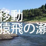 [つりよか] 祝 球磨川尺鮎 31.5cm 国内釣行100回目 やりました!初日 First Big Ayu (ShakuAyu) in Kumagawa get finally