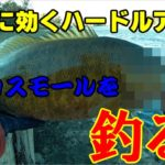 【川スモールマウスバス】早春のBIGバスをハードベイトで攻略!!