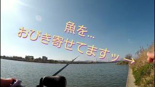 遠賀川バス釣り Rungler TV 釣りガール「まめ」