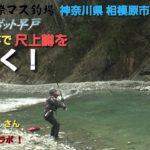 【平蔵の本流釣り!】早戸川国際マス釣り場で人気YouTuberコラボ!① 尺上ニジマス引き抜き編