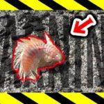 エサを投げて放置していると危険生物が釣れた!