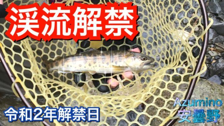 【渓流釣り】渓流解禁日