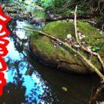 ジャングルの奥地にバス入れ食いの伝説の岩を発見 #バス釣り