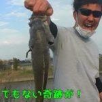 五三川でアレをなげたら、とんでもない魚が・・・