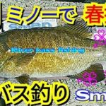 yasu 3月ミノーでビッグ川バス/春バス釣り/bass fishing/2020年3月