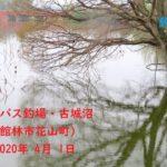 【釣場お散歩】ブラックバス釣場・古城沼(群馬県館林市花山町)2020年 4月 1日 [Fishing ground walk] black bass fishing