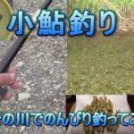 小鮎釣り。近所の川でのんびりコアユを釣ってみた。 琵琶湖 淡水魚 Fishing