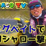 【琵琶湖バス】ビッグベイトでシャロー撃ち!視線カメラでバーチャルフィッシングを体感してください!(シマゴTV)