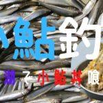 小鮎釣り【琵琶湖】 今爆釣できると聞いて小鮎釣りに初挑戦。日本最大の湖にて思う存分楽しみました。最後には小鮎天丼も作ってその場でいただきました。