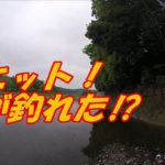 川スモールマウス探索【あれ?一投目でビッグスモール⁉】編2020年5月6日