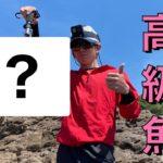 【熊本 天草 釣り】 春のエギングからの超高級魚が釣れた!