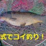 国分川でコ式! 今年最初のコイが釣れました。2020/2/15