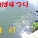 【バス釣り】川バスフィッシング【6月#1】