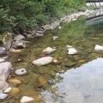 付知川で鮎釣り No 1