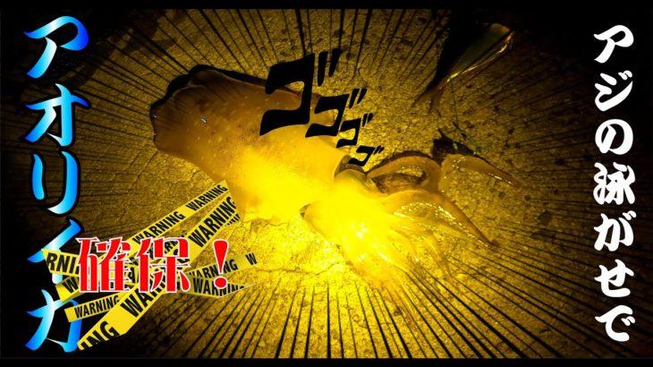 【長崎釣り】夜の堤防で活きアジを泳がせてアオリイカを確保する!!
