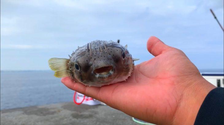 那覇の沖堤防に行ったら穴釣りで高級魚が釣れた!【那覇一文字】