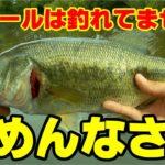 【川スモールマウスバス】スモールマウスバスが釣れません・・・