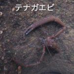 [カワムツの穴釣り]浅い川のテトラの中は生き物が沢山!