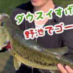 【バス釣り】秦拓馬さんありがとう!野池でダウズスイマー!