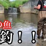 あの魚が爆釣する川で魚釣り。