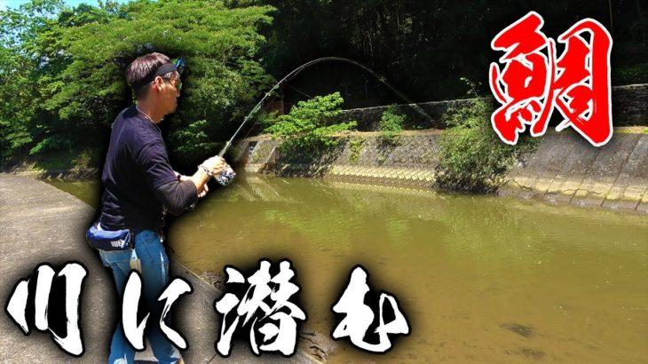 町の中に流れる川に鯛が紛れ込んでいた??