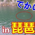 バス釣り初心者が琵琶湖でやらかす・・・
