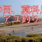 静岡 藁科川、アユ釣り。