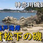神奈川磯釣り場 葉山 千貫松下の磯 森戸海岸 森戸神社