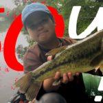 【バス釣り】12才50up⁉