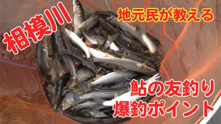 相模川のアユ釣り場、紹介(2020)/sagami river navigation